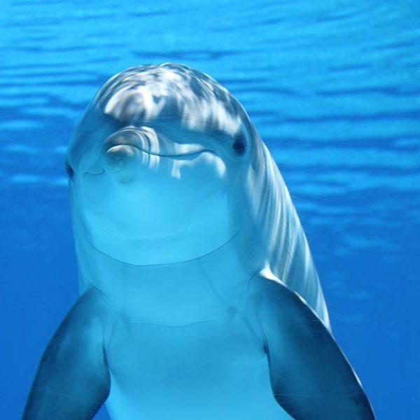 イルカは人間と並ぶ、地球の知的生命体だった!